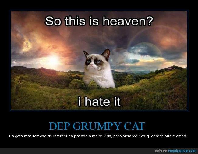 gatos,grumpy cat,muerte