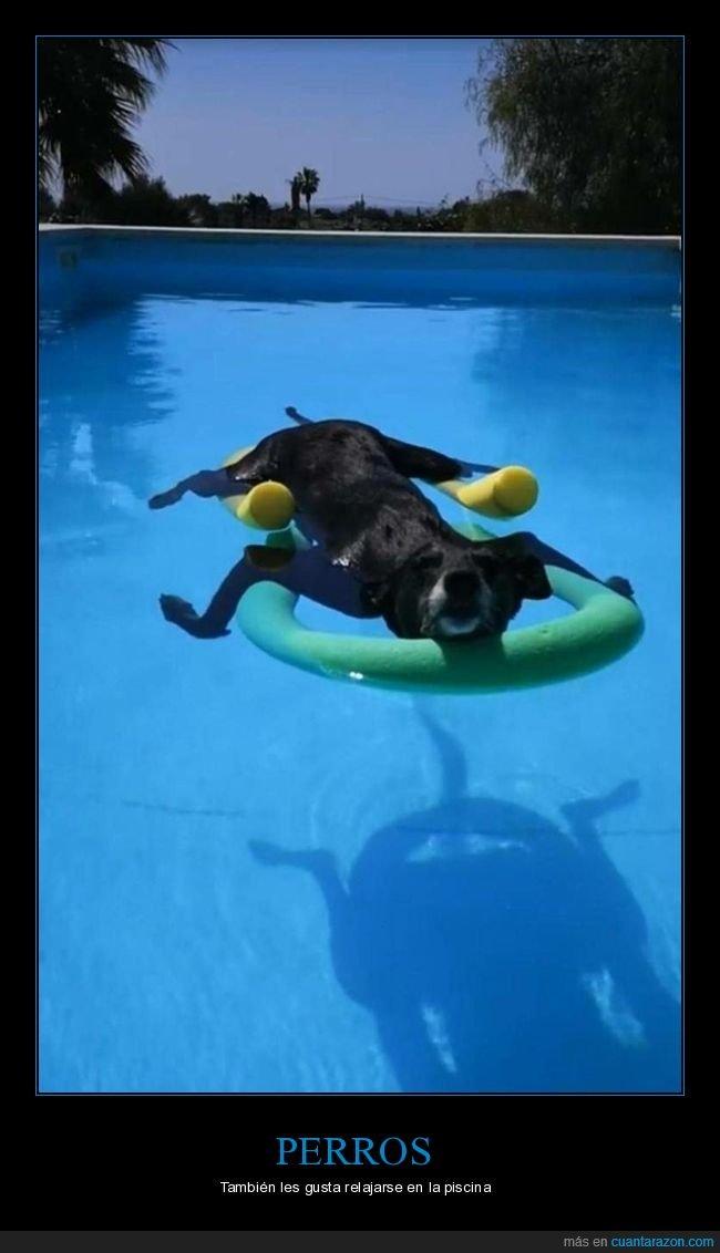 perros,piscina,relax