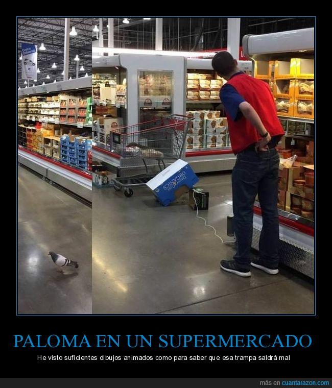 paloma,supermercado,trampa,wtf