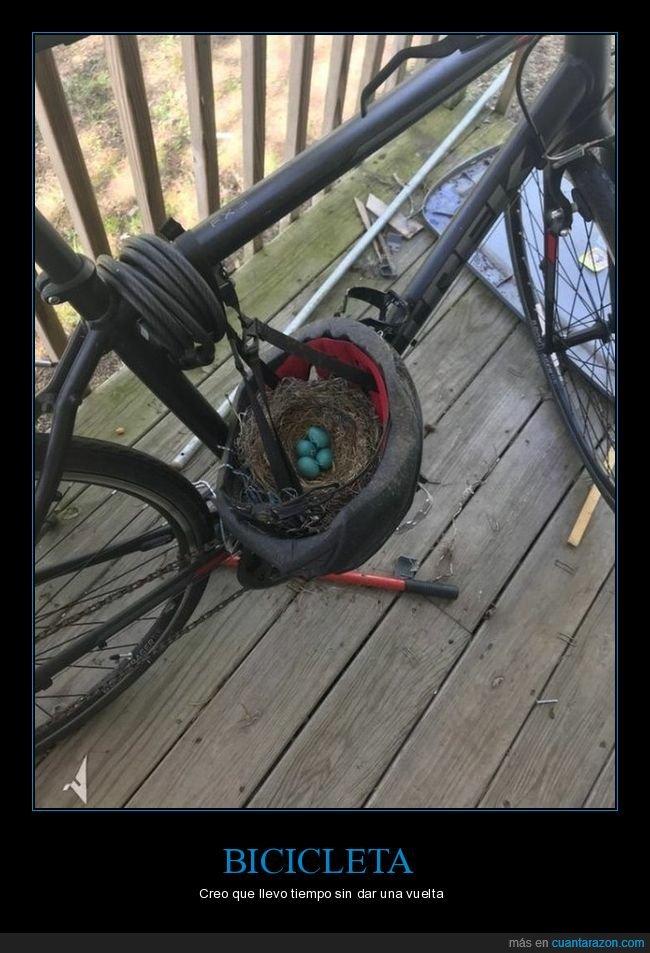 bicicleta,casco,nido