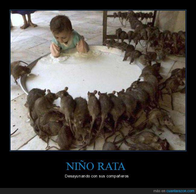 desayuno,leche,niño,rata,ratas,wtf