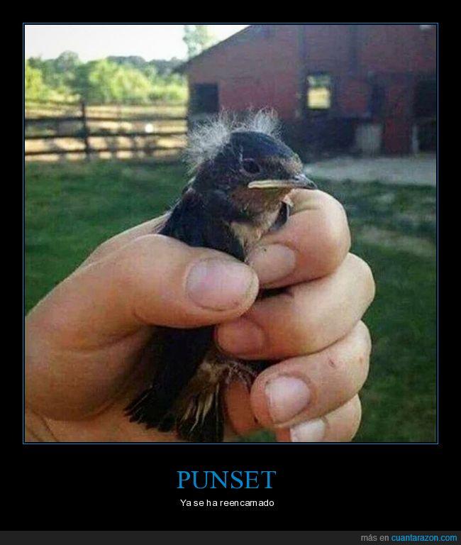 pájaro,parecidos,punset