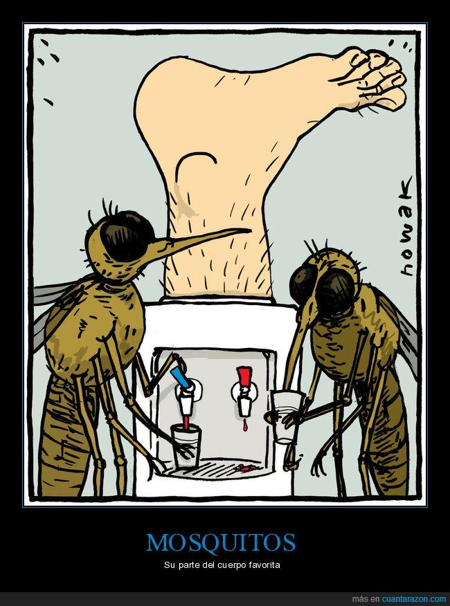 mosquitos,pie,sangre