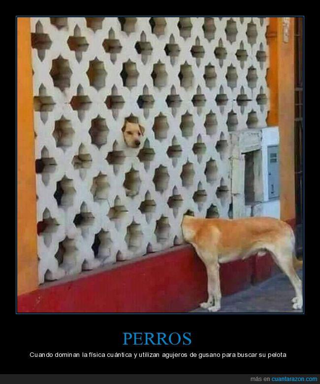 absurdo,agujero de gusano,física cuántica,perro