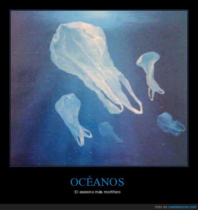 asesino,bolsas,océanos,plástico