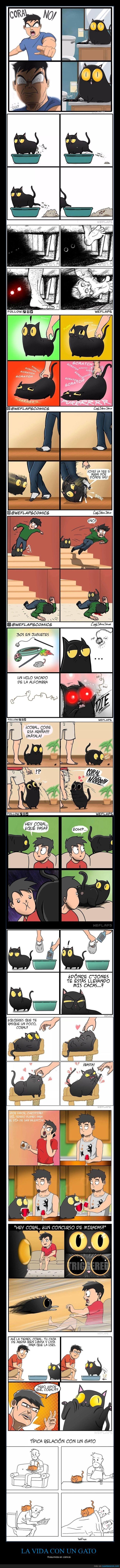 gatos,mascota,vida