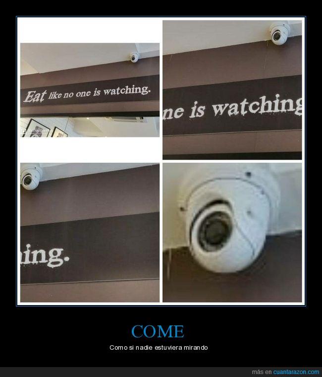 cámara,comer,mirando,wtf