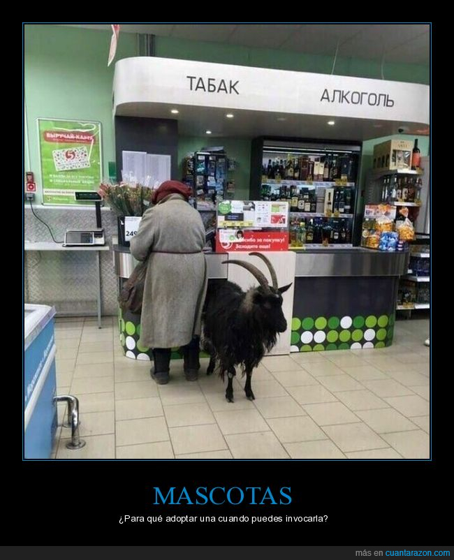 cabra,mascota,señora,wtf