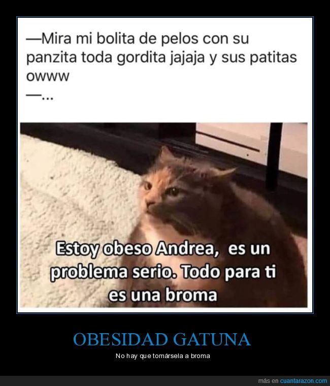 gato,gordo,obeso