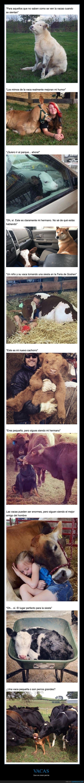 perros,vacas