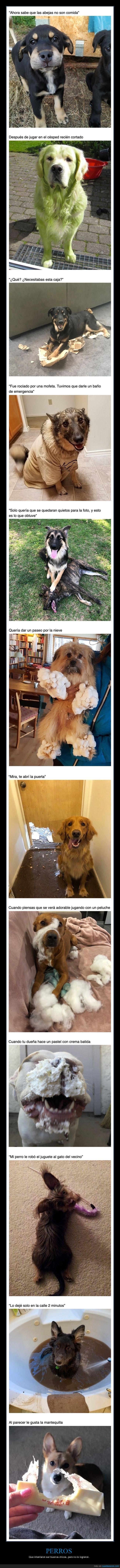 fails,perros