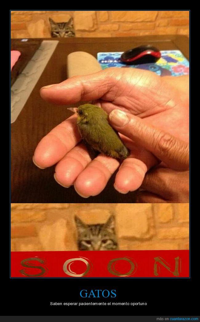 acechando,gatos,pájaro