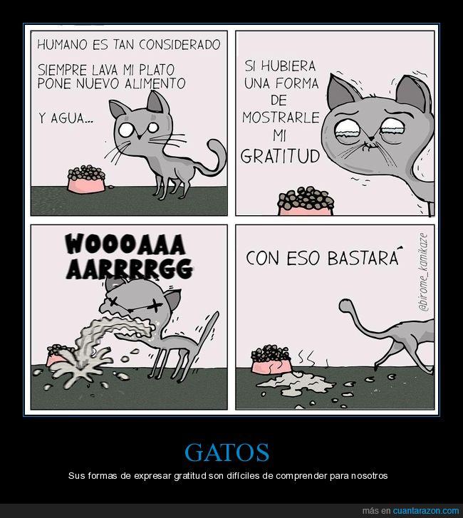 gato,gratitud,vómito