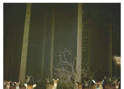 Enlace a La noche en el bosque