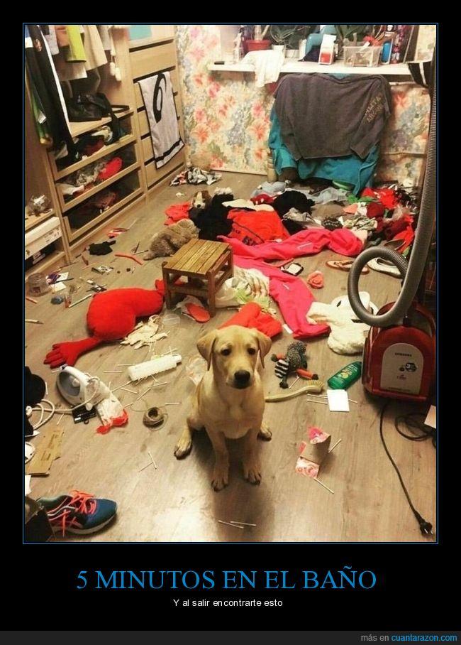 destrozo,habitación,perros