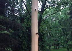 Enlace a Un rayo ha desnudado a este árbol