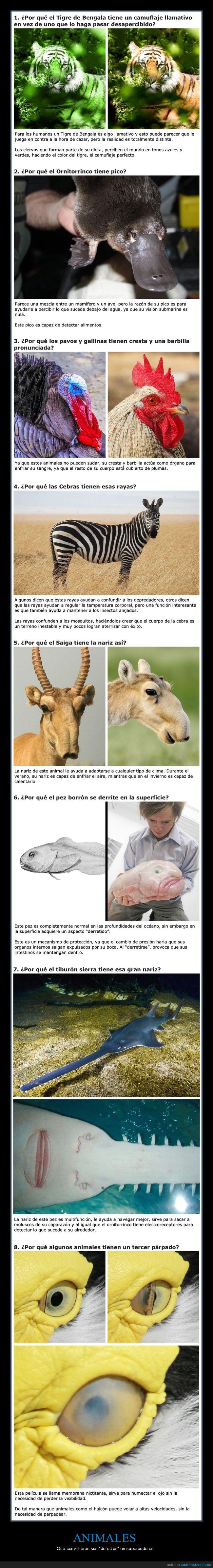 animales,curiosidades