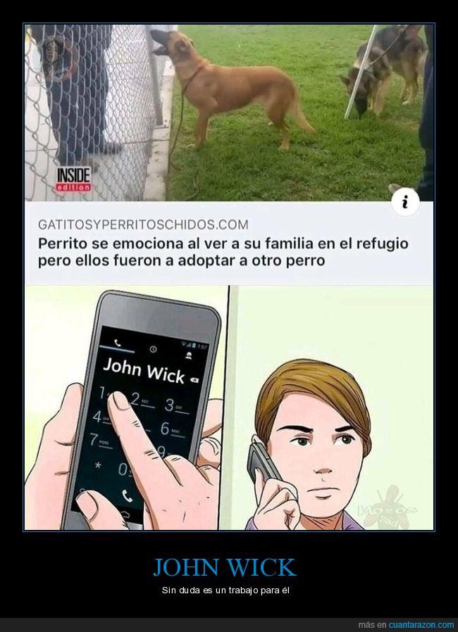 adoptar,emocionarse,familia,john wick,noticias,otro,perro,refugio