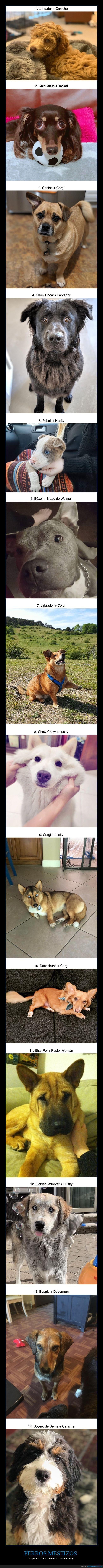 mestizos,perros,razas