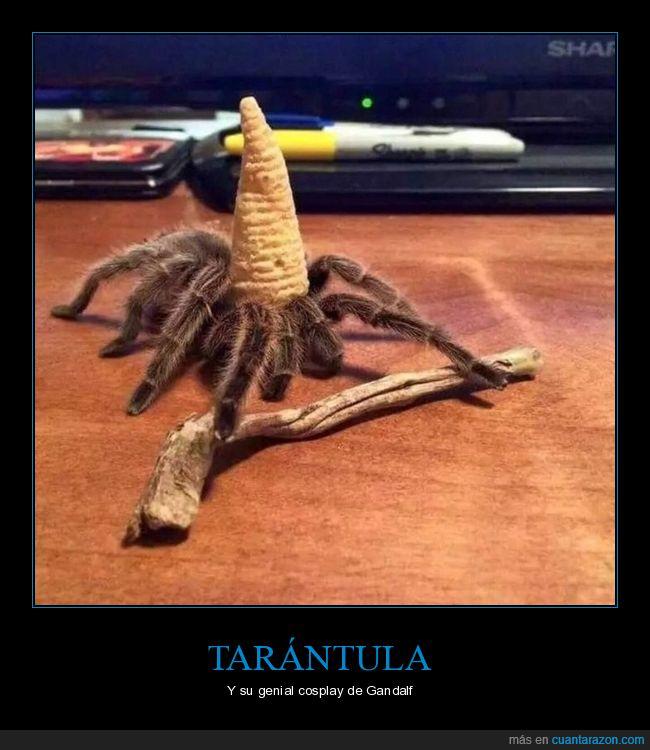 araña,cosplay,el señor de los anillos,gandalf,tarántula