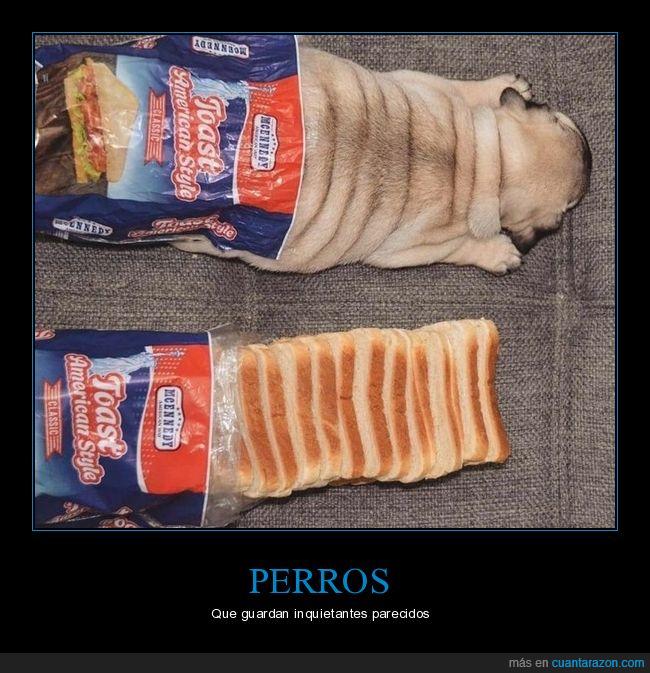 carlino,pan de molde,parecidos,perro