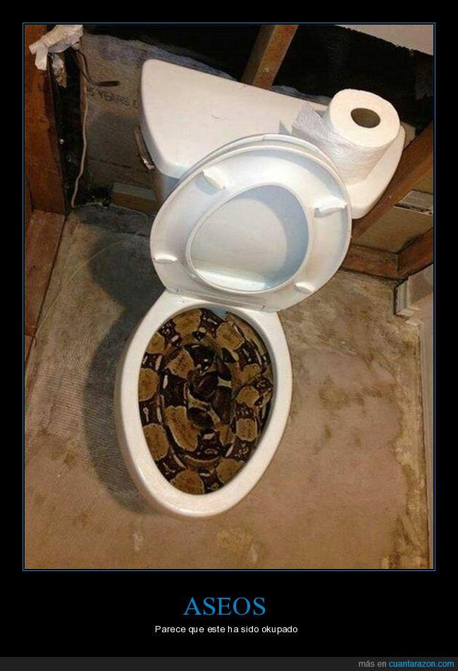 aseo,serpiente,váter