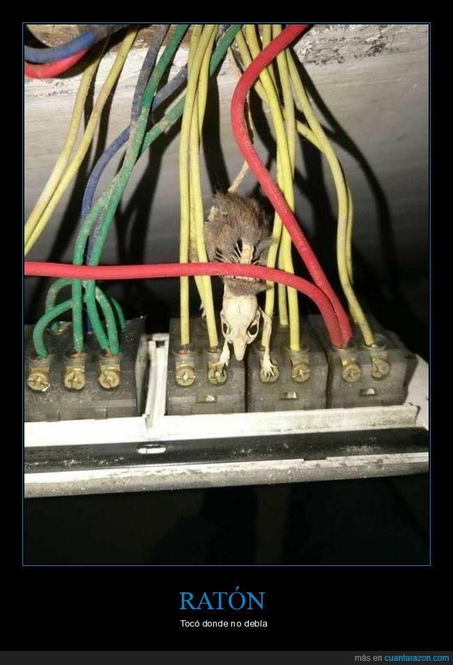 cables,muerto,ratón,wtf