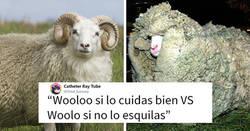 Enlace a Peta usa al pokemon Wooloo para que la gente deje de vestir lana, y se burlan de ellos