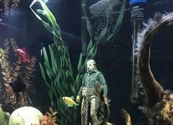 Enlace a Jason vive