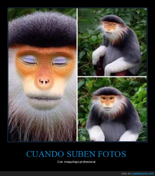 fotos,maquillaje,mono,profesional