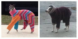 Enlace a Moda canina