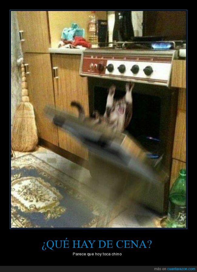 fails,gato,horno,momento exacto,wtf