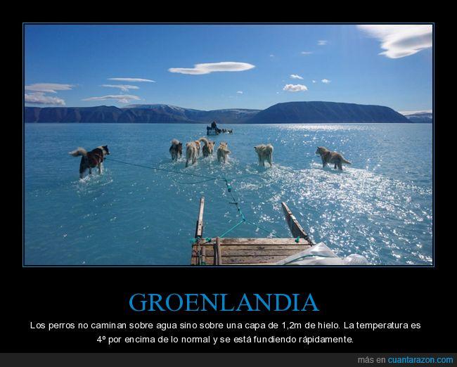 cambio climático,groenlandia,hielo,perros