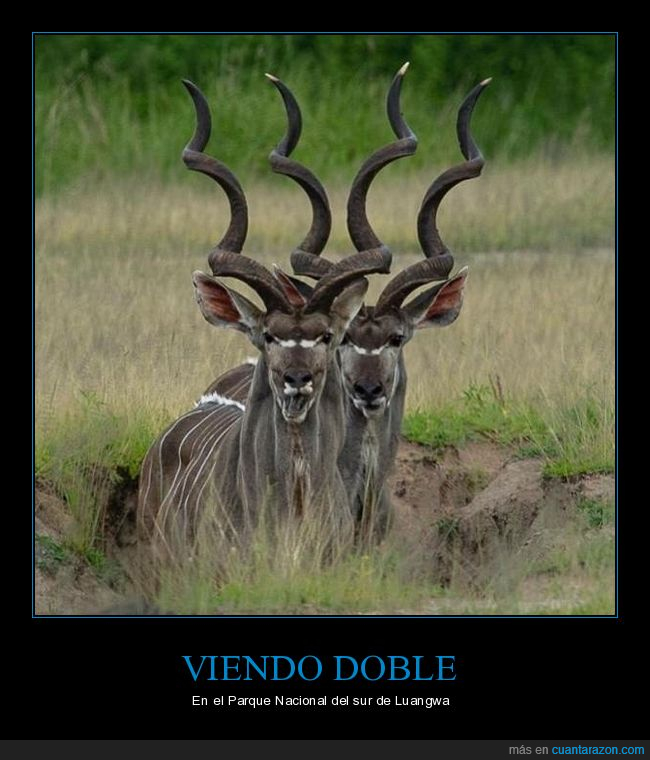 doble,kudús,wtf