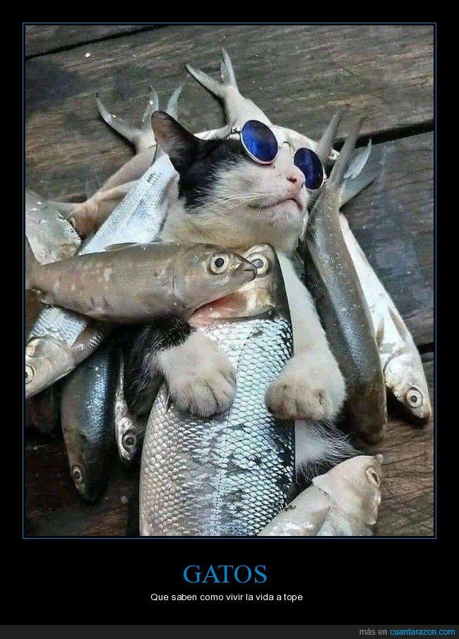 gatos,peces,wtf