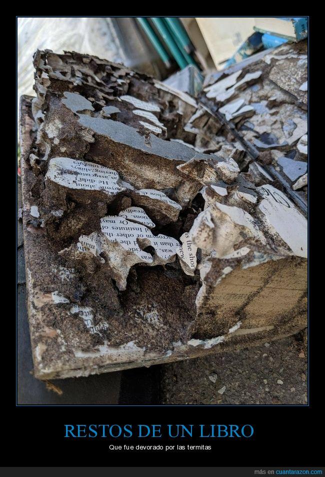 libro,restos,termitas