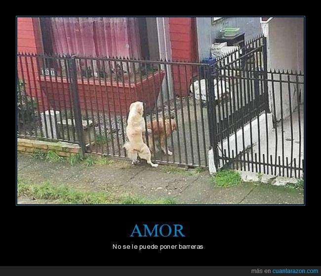amor,perros,verja