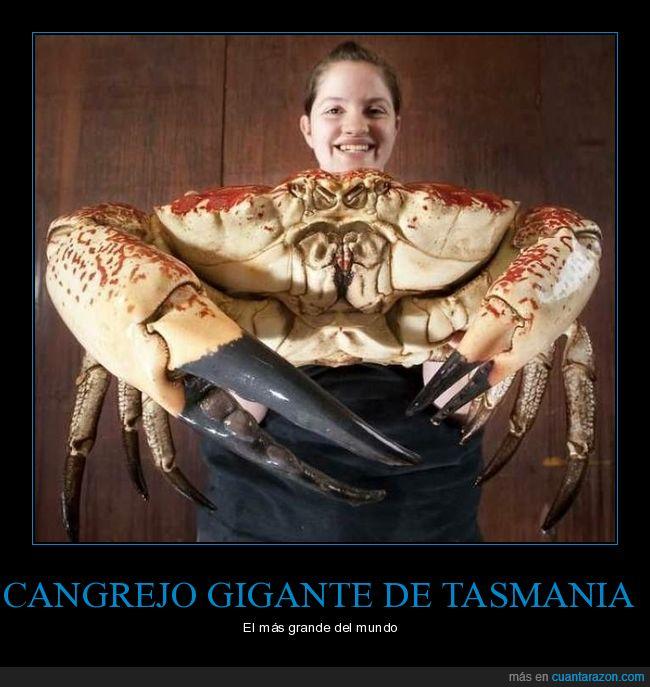 cangrejo,curiosidades,gigante