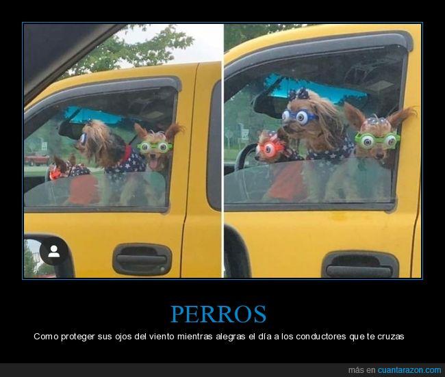 coche,gafas,ojos,perros