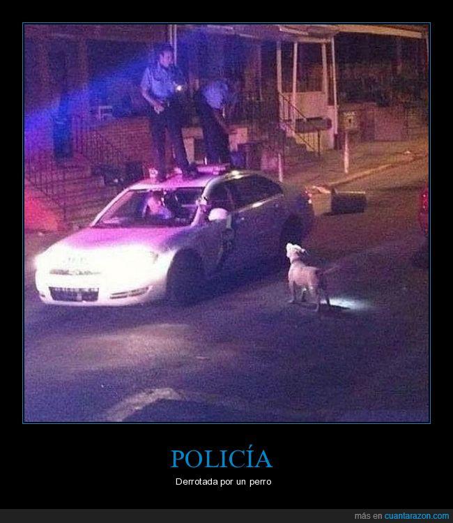 coche,fail,perro,policía