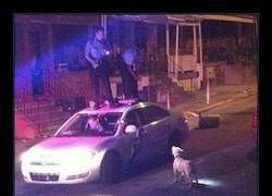 Enlace a Policías polis