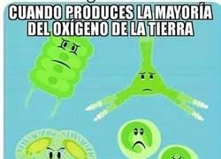 Enlace a Nadie se acuerda nunca de las diatomeas...