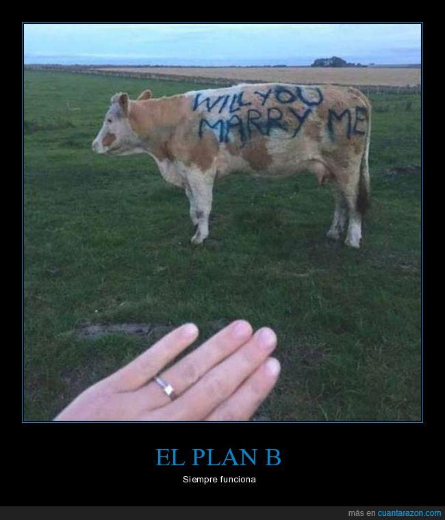 proposición,vaca,wtf