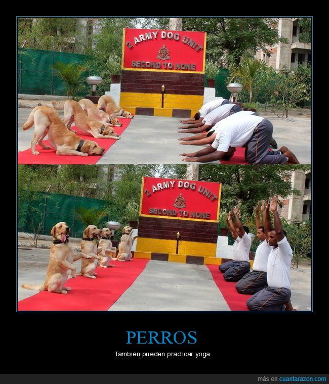 perros,posturas,yoga