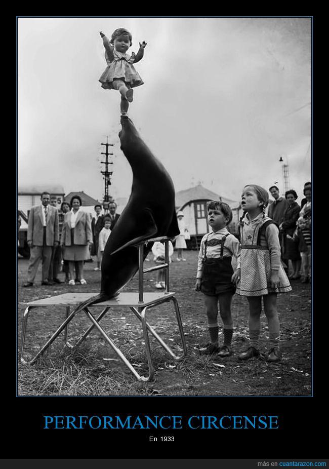 1933,circo,foca,retro