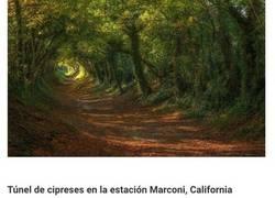 Enlace a Los túneles de árboles más mágicos del mundo