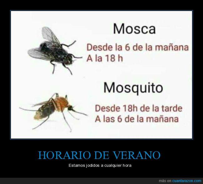 horario,mosca,mosquito,verano