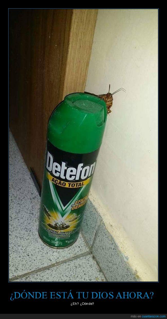 cucaracha,insecticida,wtf