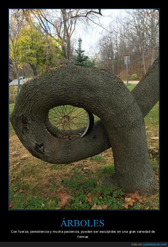 árbol,forma,rueda,wtf