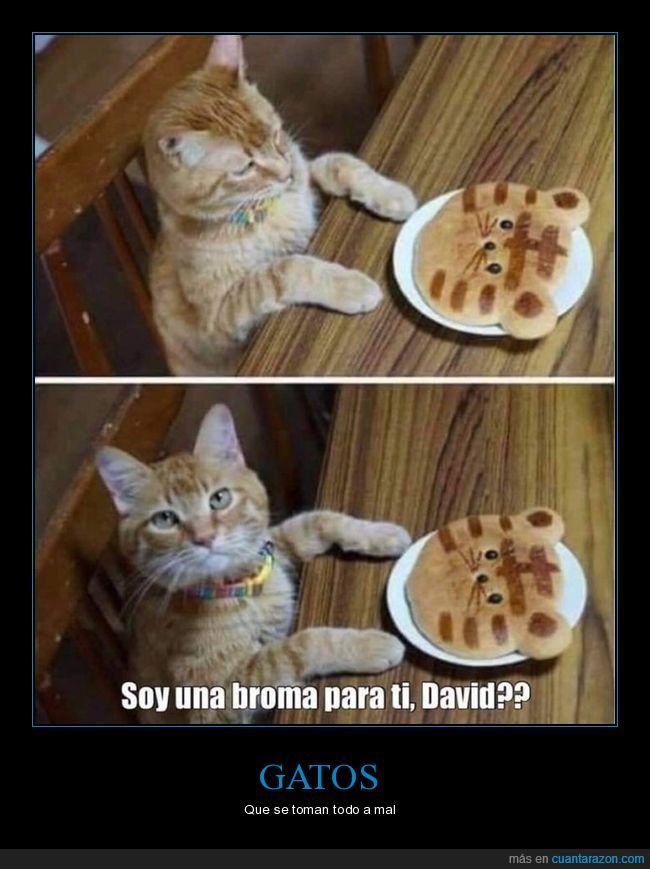 broma,gato